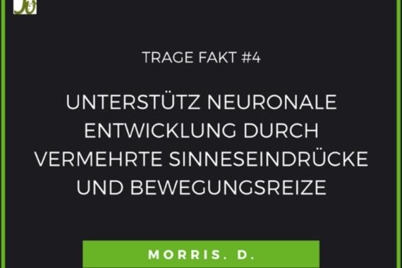 Tragen und Neuronale Entwicklung